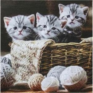 1枚バラ売りペーパーナプキン ti-flair ドイツ 3匹の猫 ネコ Striped Kittens 371056 デコパージュ ドリパージュ|ccpopo