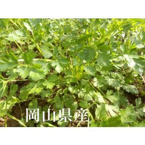 オーガニック(有機) イタリアンパセリ スムージー・野菜ジュースに最適 西日本旬野菜・岡山県産新鮮野菜