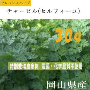 オーガニック(有機) ハーブ・チャービル(セルフィーユ)/スムージー・野菜ジュース・サラダに最適 岡山県産
