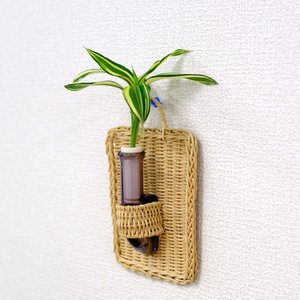 植物を壁に掛けて楽しむ セラハイト ドラセナ・サンデリアーナ ビクトリー 壁掛け用容器 『Cibi (シビ) 』 手づくり製 籐製カバー付き|ceraphyto-world