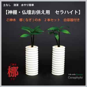 【神棚・仏壇お供え用インテリア】 ナギの木 2個セット 白容器|ceraphyto-world