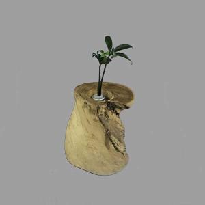 土なし 清潔 水やり簡単 奥出雲「もののけ姫」の森 木製容器 + セラハイト ナギの木 第七弾|ceraphyto-world