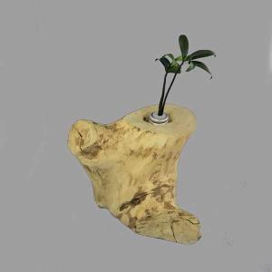 土なし 清潔 水やり簡単 奥出雲「もののけ姫」の森 木製容器 + セラハイト ナギの木 第十弾|ceraphyto-world