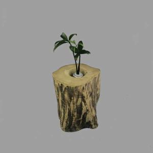 土なし 清潔 水やり簡単 奥出雲「もののけ姫」の森 木製容器 + セラハイト ナギの木 第十二弾|ceraphyto-world