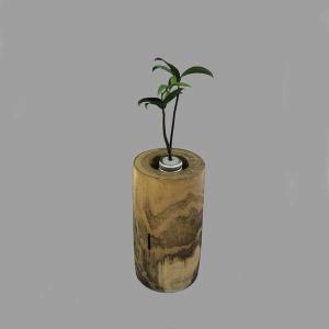 土なし 清潔 水やり簡単 奥出雲「もののけ姫」の森 木製容器 + セラハイト ナギの木 第十三弾|ceraphyto-world