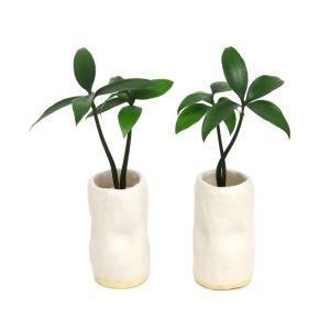 土なし 清潔 水やり簡単 セラハイト 『良縁を結ぶ梛(ナギ)の木』と 陶房「うさぎ庵」特製 『陶製円筒水盆器』 2個セット|ceraphyto-world