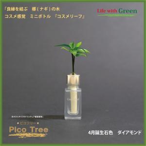 「コスメ風ミニボトル 4月誕生石色 ダイアモンド」と「土なし・清潔・水やり簡単 セラハイト ミニチュア観葉植物 ピコツリー ナギの木」|ceraphyto-world