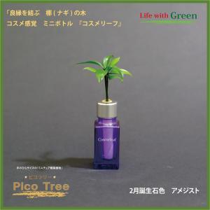 「コスメ風ミニボトル 2月誕生石色 アメジスト」と「土なし・清潔・水やり簡単 セラハイト ミニチュア観葉植物 ピコツリー ナギの木」|ceraphyto-world