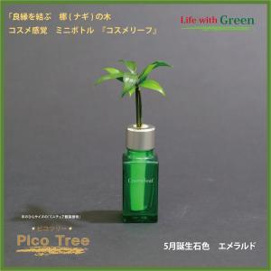 「コスメ風ミニボトル 5月誕生石色 エメラルド」と「土なし・清潔・水やり簡単 セラハイト ミニチュア観葉植物 ピコツリー ナギの木」|ceraphyto-world