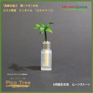 「コスメ風ミニボトル 6月誕生石色 ムーンストーン」と「土なし・清潔・水やり簡単 セラハイト ミニチュア観葉植物 ピコツリー ナギの木」|ceraphyto-world