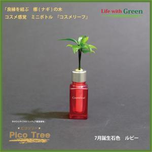「コスメ風ミニボトル 7月誕生石色 ルビー」と「土なし・清潔・水やり簡単 セラハイト ミニチュア観葉植物 ピコツリー ナギの木」|ceraphyto-world