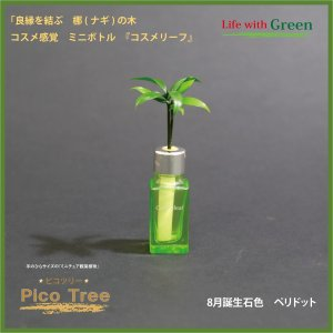 「コスメ風ミニボトル 8月誕生石色 ペリドット」と「土なし・清潔・水やり簡単 セラハイト ミニチュア観葉植物 ピコツリー ナギの木」|ceraphyto-world