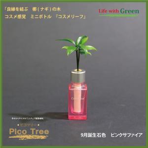 「コスメ風ミニボトル 9月誕生石色 ピンクサファイア」と「土なし・清潔・水やり簡単 セラハイト ミニチュア観葉植物 ピコツリー ナギの木」|ceraphyto-world