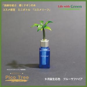 「コスメ風ミニボトル 9月誕生石色 ブルーサファイア」と「土なし・清潔・水やり簡単 セラハイト ミニチュア観葉植物 ピコツリー ナギの木」|ceraphyto-world