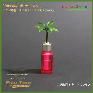 「コスメ風ミニボトル 10月誕生石色 トルマリン」と「土なし・清潔・水やり簡単 セラハイト ミニチュア観葉植物 ピコツリー ナギの木」|ceraphyto-world