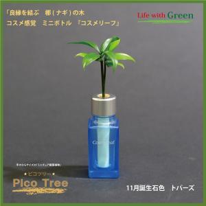 「コスメ風ミニボトル 11月誕生石色 トパーズ」と「土なし・清潔・水やり簡単 セラハイト ミニチュア観葉植物 ピコツリー ナギの木」|ceraphyto-world