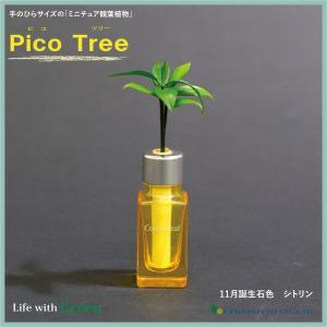 「コスメ風ミニボトル 11月誕生石色 シトリン」と「土なし・清潔・水やり簡単 セラハイト ミニチュア観葉植物 ピコツリー ナギの木」|ceraphyto-world