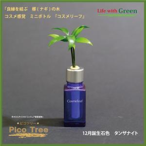 「コスメ風ミニボトル 12月誕生石色 タンザナイト」と「土なし・清潔・水やり簡単 セラハイト ミニチュア観葉植物 ピコツリー ナギの木」|ceraphyto-world