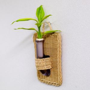 植物を壁に掛けて楽しむ セラハイト ドラセナ・サンデリアーナ ゴールド 壁掛け用容器 『Cibi (シビ) 』 手づくり製 籐製カバー付き|ceraphyto-world