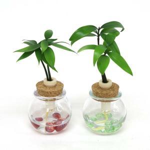 土なし 清潔 水やり簡単 セラハイト 良縁を結ぶ『梛(ナギ)の木』 2個セット|ceraphyto-world