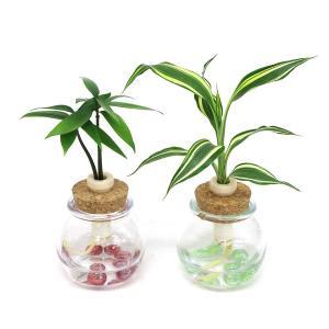 土なし 清潔 水やり簡単 セラハイト 良縁を結ぶ『梛(ナギ)の木』と『ドラセナ・サンデリアーナ・ビクトリー』 2個セット|ceraphyto-world