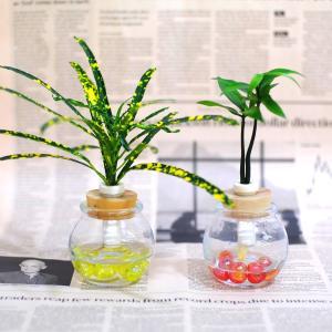 土なし 清潔 水やり簡単 セラハイト 室内に彩りを添える植物 『クロトン』と『良縁を結ぶ梛(ナギ)の木』 2個セット|ceraphyto-world