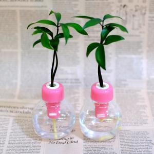 セラハイトご神木ナギの木とカラフル容器 2セット 恋愛運アップ|ceraphyto-world