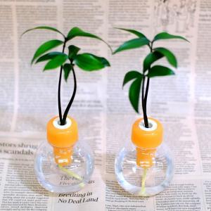 セラハイトご神木ナギの木とカラフル容器 2セット|ceraphyto-world