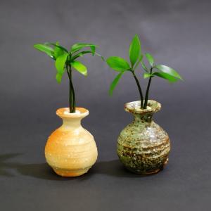 土なし 清潔 水やり簡単 セラハイト 良縁を結ぶ『梛(ナギ)の木』と信楽焼つぼ 2個セット|ceraphyto-world