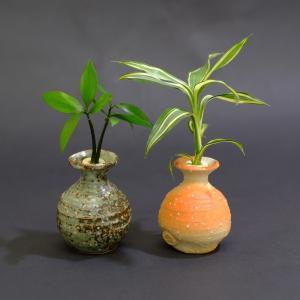 【父の日限定価格】土なし 清潔 水やり簡単 セラハイト 良縁を結ぶ『梛(ナギ)の木』と『ドラセナ・サンデリアーナ』信楽焼つぼ 2個セット|ceraphyto-world