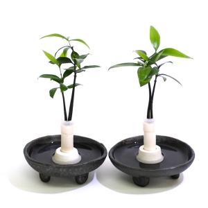 土なし 清潔 水やり簡単 良縁を結ぶ梛(ナギ)の木と 陶房「うさぎ庵」特製『巻渦三脚皿』 2個セット スタンドタイプ|ceraphyto-world
