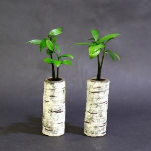 良縁を結ぶ「梛(ナギ)の木」と『陶房Room101』特製「白樺風陶器ベース」 2個セット スタンド式 ceraphyto-world