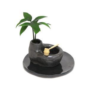 「良縁を結ぶ梛(ナギ)の木」と 陶房「うさぎ庵」特製手作 「たまり石盆景」 【土なし 清潔 水やり簡単 セラハイト】|ceraphyto-world
