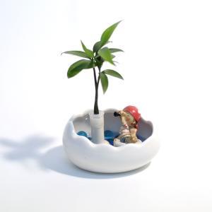 土なし清潔水やり簡単セラハイト 良縁を結ぶ「梛(ナギ)の木」と松野工業社製「ワイドエッグポットとフロートパイレーツボーイ」|ceraphyto-world