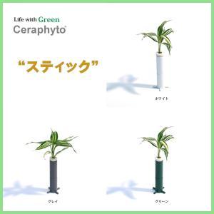 『幸福の木 ドラセナ・サンデリアーナ・ビクトリー』と ハイトカルチャ社製『スティック』2個セット グリーン、グレー、ホワイトから選択可能 ceraphyto-world
