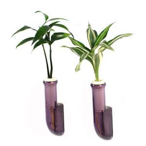 植物を壁に飾る 「良縁を結ぶ梛(ナギ)の木」「幸福の木 ドラセナ・サンデリアーナビクトリー」と壁掛け用容器「シビ smoke」2個セット|ceraphyto-world