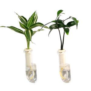 植物を壁に飾る 「良縁を結ぶ梛(ナギ)の木」「幸福の木 ドラセナ・サンデリアーナビクトリー」と壁掛け用容器「シビ clear」2個セット|ceraphyto-world