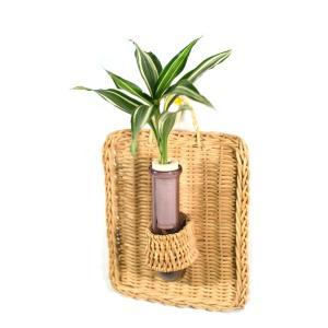 植物を壁に掛けて楽しむ セラハイト ドラセナ・サンデリアーナビクトリー 壁掛け用容器 『Cibi (シビ) 』 手づくり製 籐製カバー付き|ceraphyto-world
