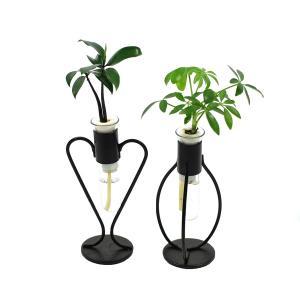 「良縁を結ぶ 梛 (ナギ) の木」「傘の木 シェフレラ」 と 三浦園芸社の「アイアンスタンド」 2個セット|ceraphyto-world