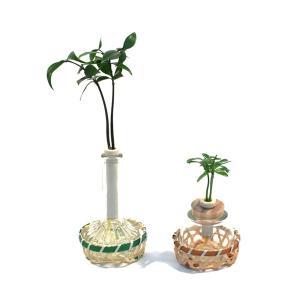 良縁を結ぶ『梛(ナギ)の木』『槇(マキ)の木 (花言葉:慈愛、色あせぬ恋)』とタマビン・ランプビン 2個セット 籐籠付き 土なし 清潔 水やり簡単|ceraphyto-world