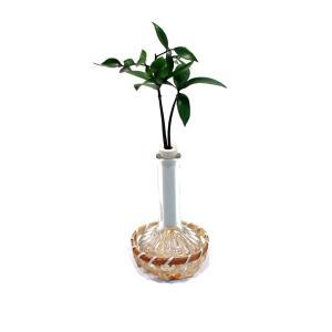 良縁を結ぶ『梛(ナギ)の木』とランプビン 1個セット 籐籠付き 土なし 清潔 水やり簡単 セラハイト|ceraphyto-world