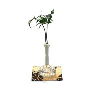 良縁を結ぶ『梛(ナギ)の木』とランプビン 1個セット  土なし 清潔 水やり簡単 セラハイト|ceraphyto-world