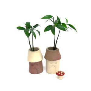 良縁を結ぶ「梛(ナギ)の木」と『クリスマスローズ』手作り「笑福ハウス」2個セット キノコ付き  【3週間枯れ保証】|ceraphyto-world