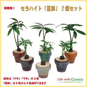 【セラハイト植物と豆鉢2個セット】植物はナギ・マキの2種、豆鉢は7色から選択できます【手のひらサイズで可愛い新感覚の超ミニ観葉植物です】|ceraphyto-world