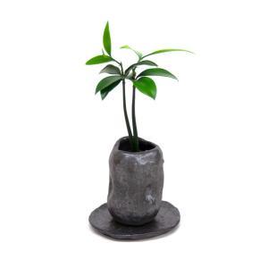 セラハイト「良縁を結ぶ梛(ナギ)の木」と 陶房「うさぎ庵」プロデュース 「盆景鉢 (皿付き)」 【土なし 清潔 水やり簡単 セラハイト】|ceraphyto-world