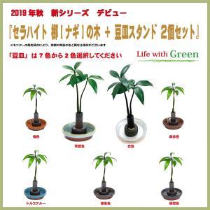 【セラハイト ご神木 梛(なぎ)の木 と 豆皿2個セット】豆皿は7色から選択できます【手のひらサイズで可愛い新感覚の超ミニ観葉植物です】|ceraphyto-world