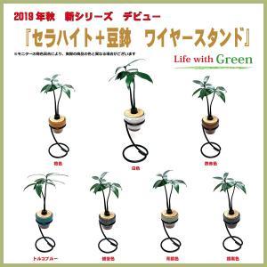【セラハイト植物と豆鉢とワイヤースタンド2個セット】植物はナギ・マキの2種、豆鉢は7色から選択できます【手のひらサイズで可愛い】|ceraphyto-world