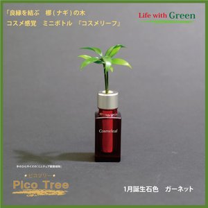 「コスメ風ミニボトル 1月誕生石色 ガーネット」と「土なし・清潔・水やり簡単 セラハイト ミニチュア観葉植物 ピコツリー ナギの木」|ceraphyto-world