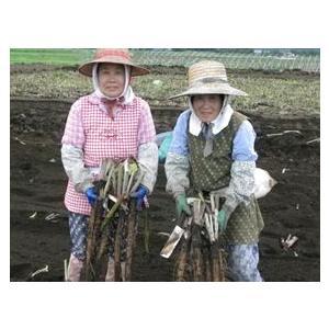 ごぼう茶 国産 3g 30包 送料無料 九州産 皮付きごぼう 遠赤焙煎 健康茶|chamise|02
