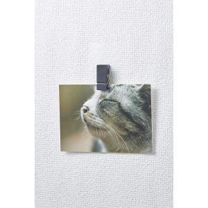 3M コマンド フック 壁紙用 フォトクリップ ホワイト 2個 CMK-SC01|chan-gaba